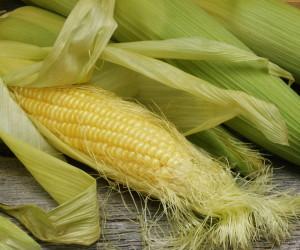 Кукурузные рыльца для похудения: стройная фигура? Легко!