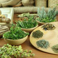 Трава бардакош для похудения: противопоказания и способы применения