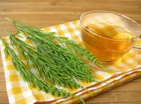 Хвощ для похудения: сбрасываем вес на травах