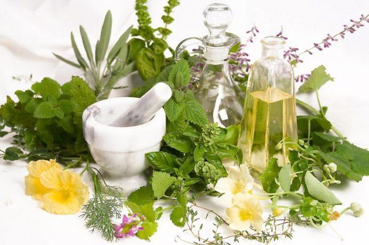 Травы для очищения организма: зеленый цвет здоровья