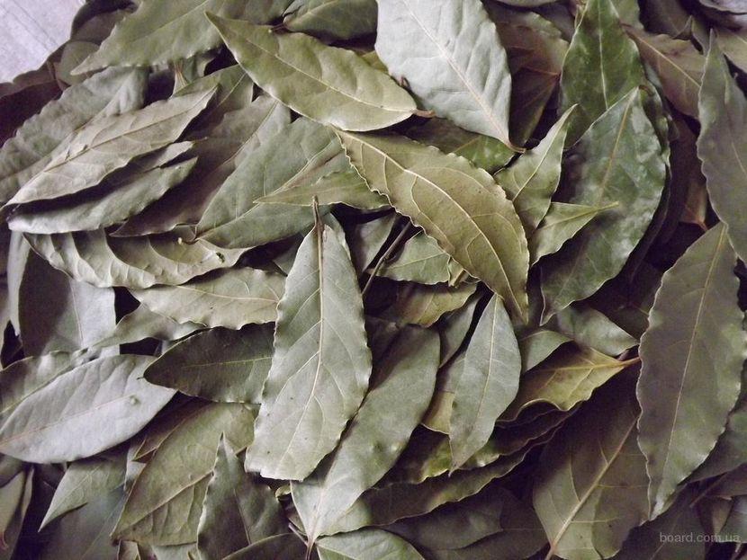 Очищения организма лавровым листом