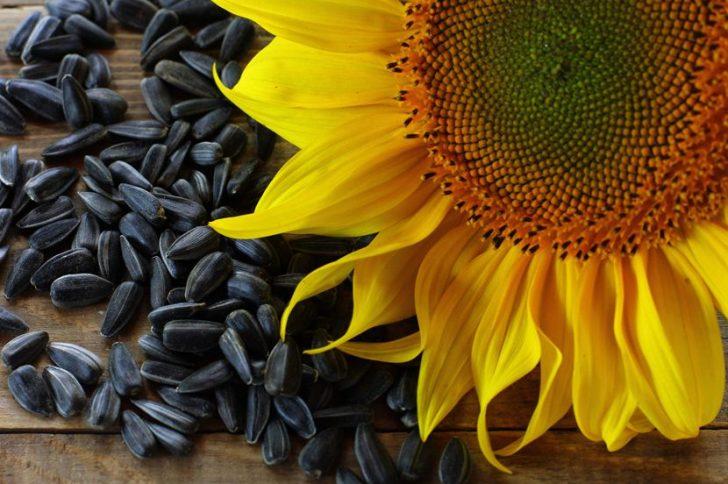Можно ли потолстеть от жареных семечек? Их влияние на организм