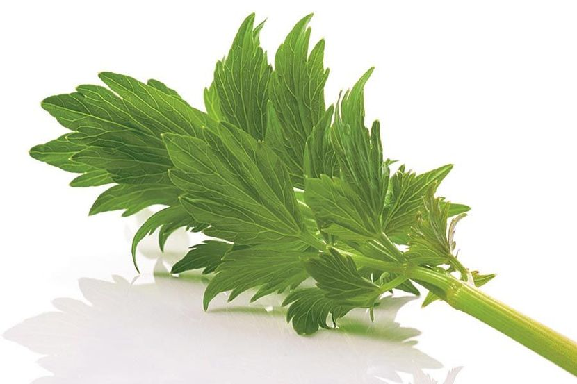 Травы от выпадения волос
