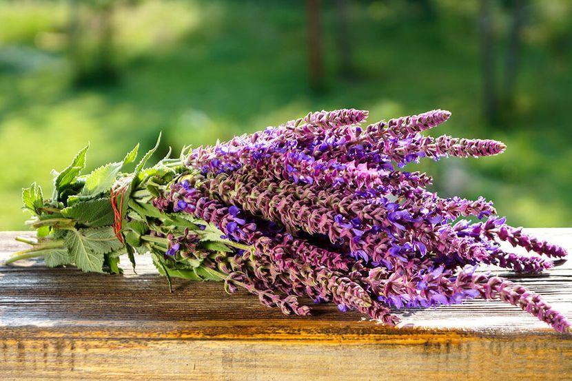 Травы для укрепления волос в домашних условиях
