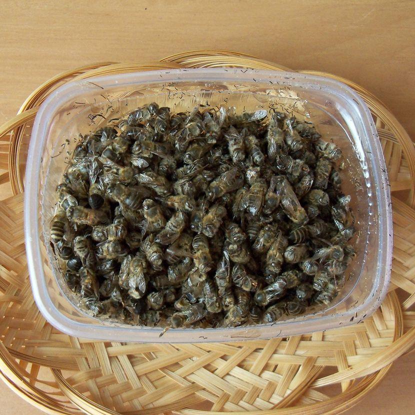 Отвар из пчелиного подмора от простатита