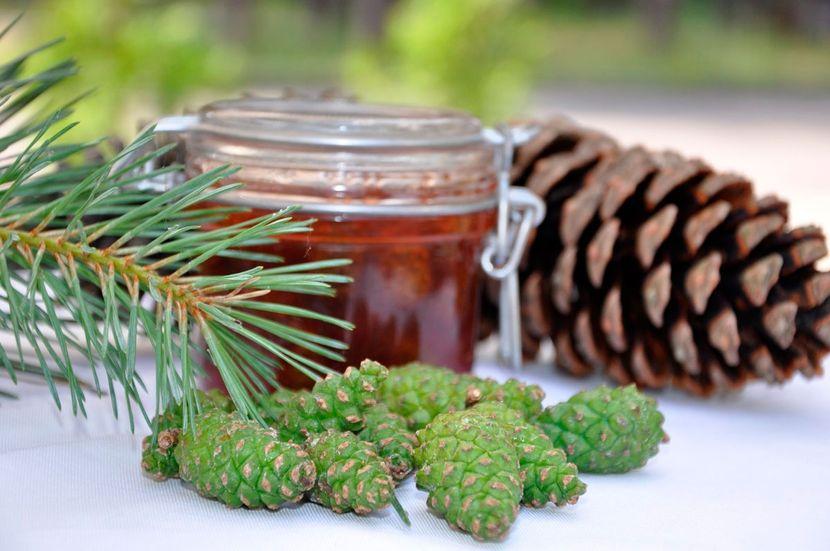 Можно ли приготовить настойку из сосновых шишек самостоятельно?