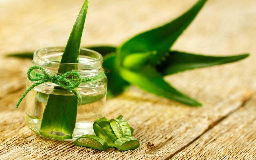 Мазь от варикоза на основе меда и листьев алоэ