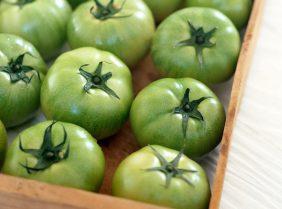 Зеленые помидоры против варикоза вен: способы применения