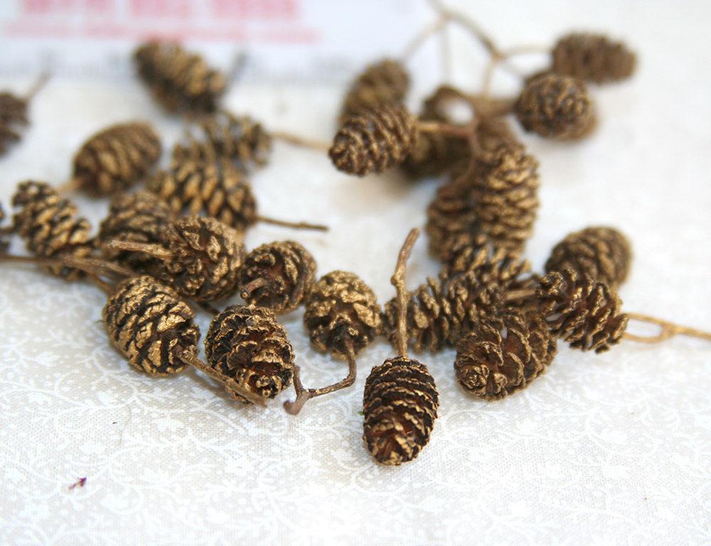 Травы при язве желудка и двенадцатиперстной кишки для лечения