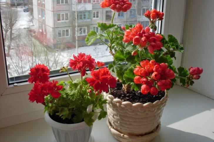 Цветы полезные для здоровья