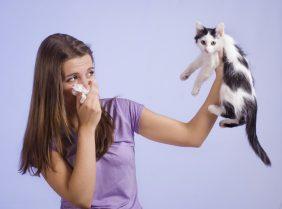 Аллергия на шерсть домашних животных: проявления и способы борьбы