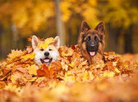 Все о собаках на сайте Petstory