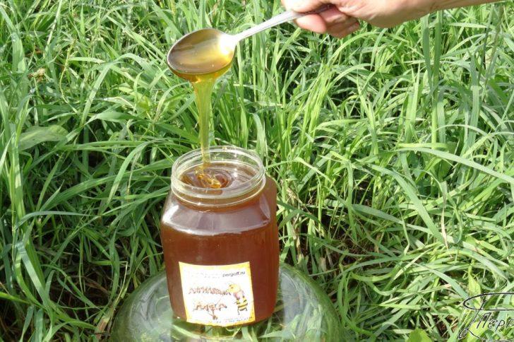 Редкий и необычный дягилевый мёд