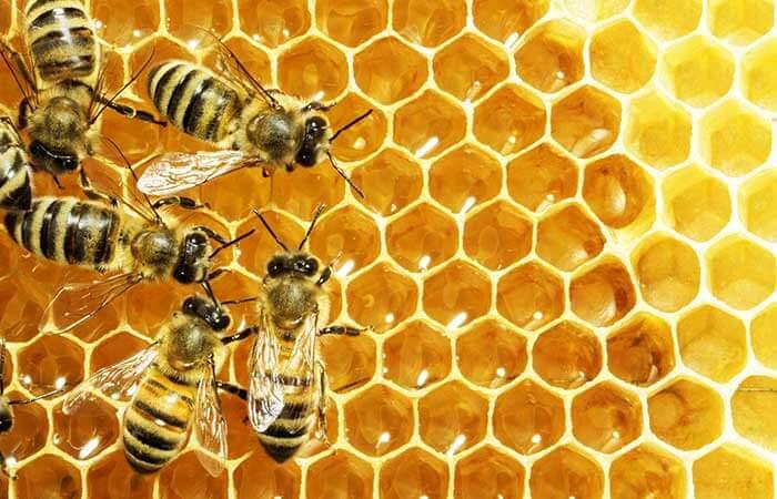 Полезные свойства пчелиного прополиса и его применение