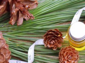 Кедровое масло: свойства, применение в диетологии и косметологии